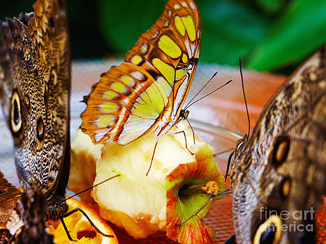 Nick  Biemans - Butterfly party -narrow depth of field
