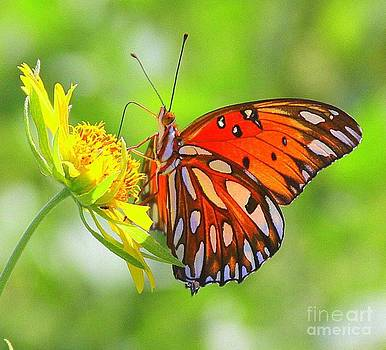 Butterfly by Patricia Alexander