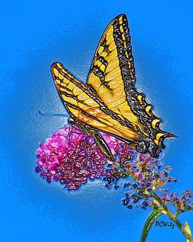Patrick Witz - Butterfly