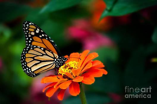 Butterfly Perch by Jennifer Englehardt