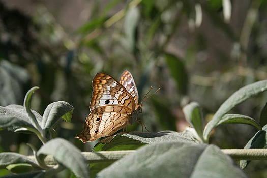 Butterfly Princess by Rebecca Christine Cardenas