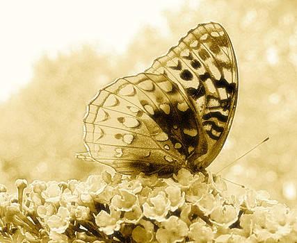 Randi Kuhne - Butterfly