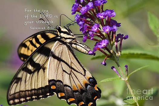 Jill Lang - Butterfly Scripture
