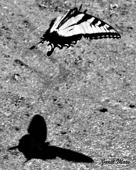 Butterfly Shadow by Janet Moss