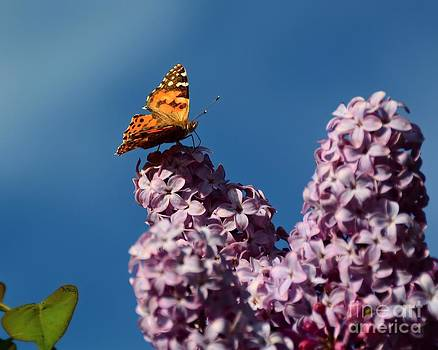 Patrick Witz - Butterfly Shadow