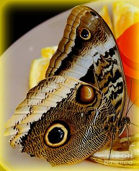 Gail Matthews - Butterfly shares my lunch