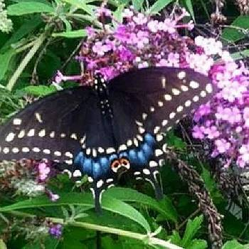 #butterfly #springtime by Auntie M
