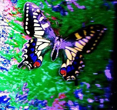 Anne-Elizabeth Whiteway - Butterfly Stay With Me