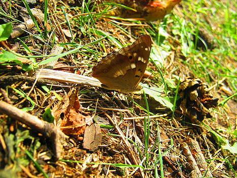 Butterfly by Tatyana Primak