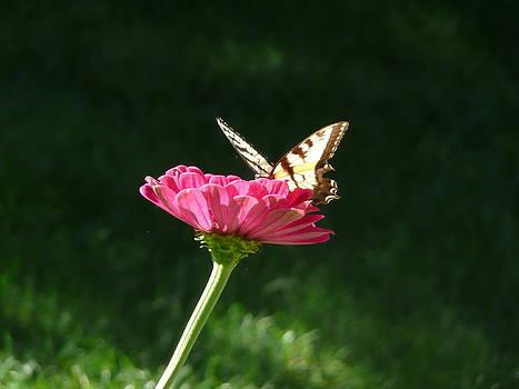 Angela Hansen - butterfly throne