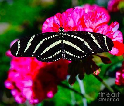 Tracey McQuain - Butterfly