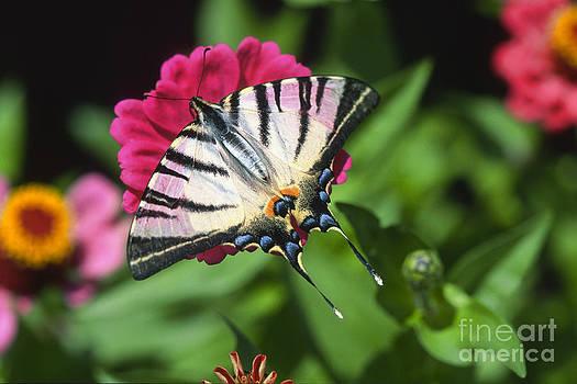 Butterfly by Vladimir Sidoropolev