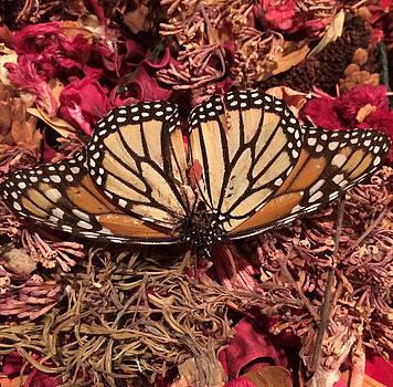 Butterfly Wings and Potpourri by Patricia Januszkiewicz