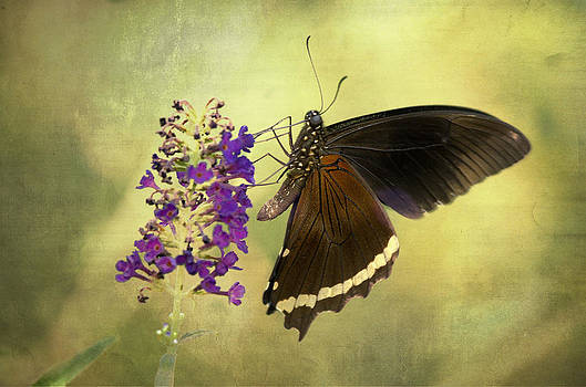 Saija  Lehtonen - Butterfly Wings