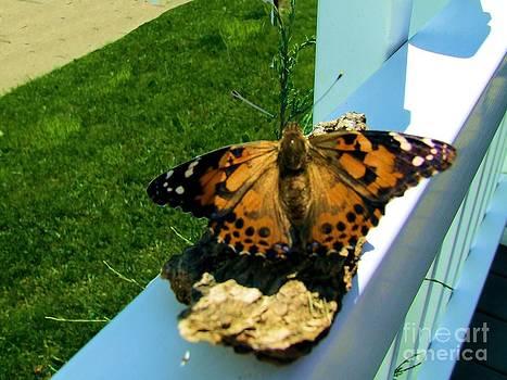 Scott B Bennett - Butterfly wings
