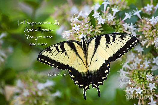 Jill Lang - Butterfly with Scripture
