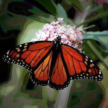 Butterfly_02 by George Szilagyi