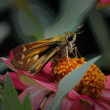 Butterfly_05 by George Szilagyi
