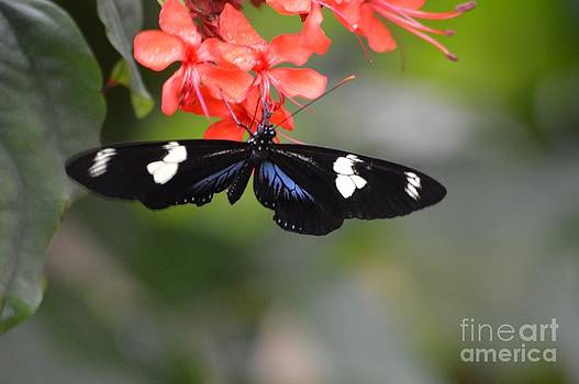 Butterfly2 by Krissy Small