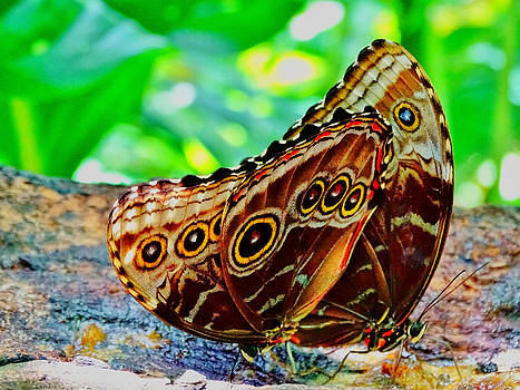 Butterfly6 by Nelin Reisman