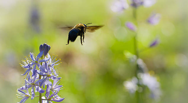 Buzz Off by Annette Hugen