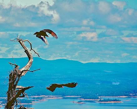 Buzzards Takin Off by Larry Bodinson