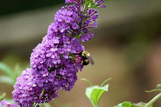 Buzzing Botanical beauty by Kim Pate