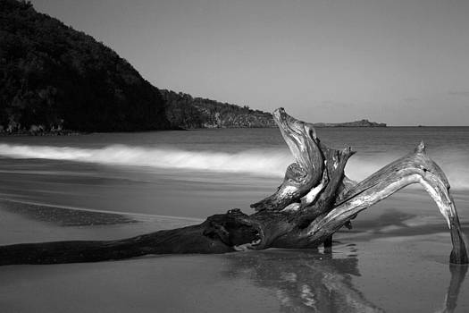 BW Driftwood by Kim French