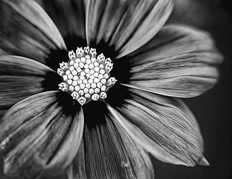 BW Flower Art by Tammy Smith
