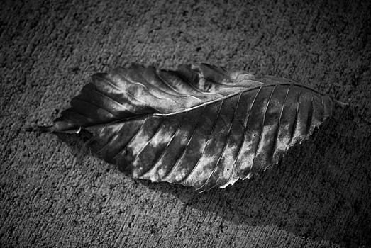 BW Leaf 1 by Shanna Lewis