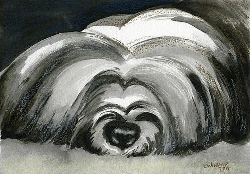 BW Tibetian Terrier by Christine Winship