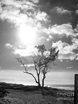 By the Sea by Lorraine Heath