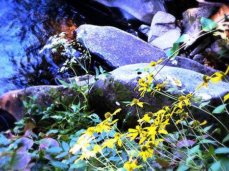 Allicat Photography - By the Yellow Creek