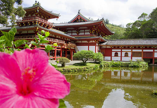 Byodo and Pink Hibiscus by Ashlee Meyer