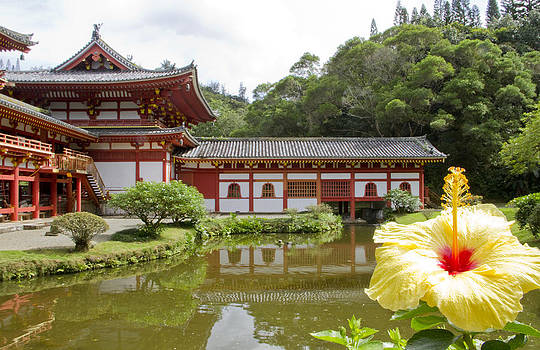 Byodo Temple and Yellow Hibiscus  by Ashlee Meyer