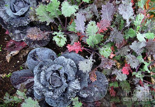 Ellen Miffitt - Cabbage and Kale