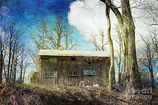 Cabin Fever by A New Focus Photography
