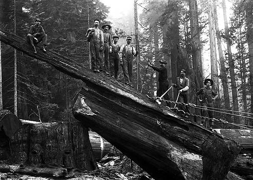 Daniel Hagerman - CABLING a REDWOOD LOG c. 1890