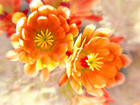 Cacti at Nooni - Horizontal by Cindy Moleski
