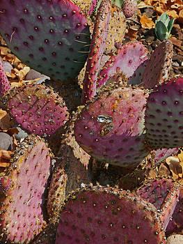 Joe Bledsoe - Cacti