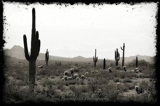 Cacti Land by Tina Hannaford