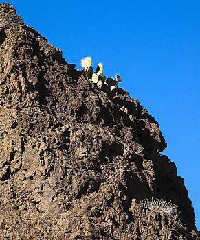 Steven Ralser - Cactus - Chupederas - New Mexico