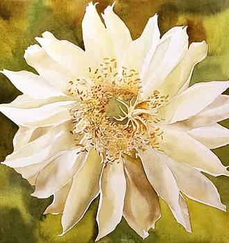 Alfred Ng - cactus bloom