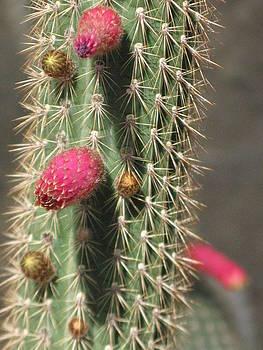 Cactus by Carli Tolmie