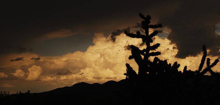 Cactus Facing Storm by Sheryl Cox