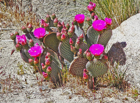 Gregory Dyer - Cactus Flowers