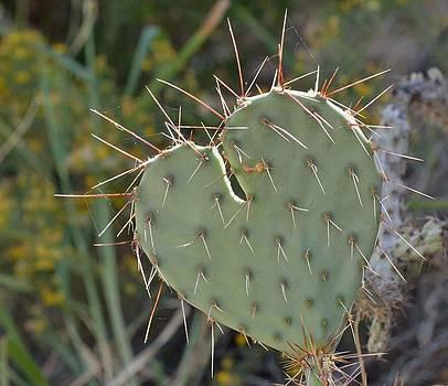Cactus Heart by Old Pueblo Photography
