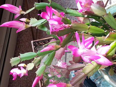 Cactus in Blu Vase by Elizabeth Jandola