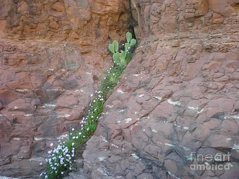 Cactus in the Rocks by Debbie Wells