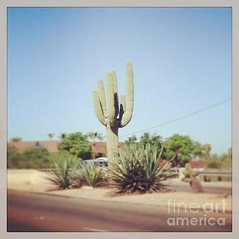 Cactus in the Sun by Kristi Jacobsen